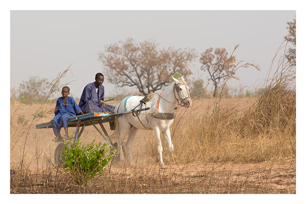 Father and Son Heading into Town, Upcountry, The Gambia